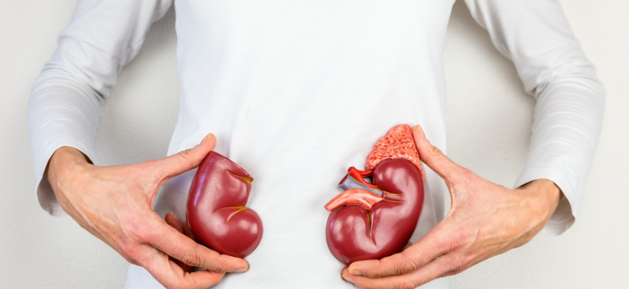 Tips for Maintaining Healthy Kidneys